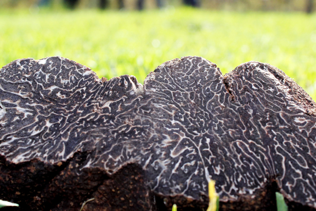Connoisseur's Guide to Australian Truffles