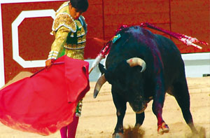 bullfighting-spain