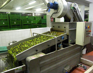umbria-olive-oil-manufacture